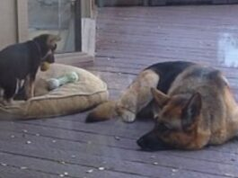 cane-cucciolo-protagonisti-scena-bellissima