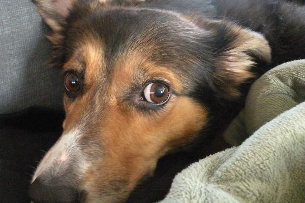 cane con naso grosso