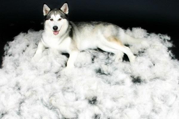 cane e tappeto di peli