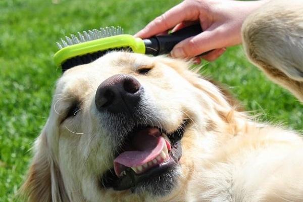 spazzolare il cane