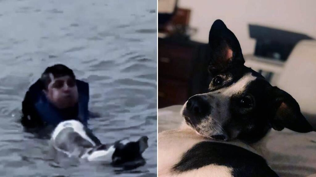 Cane rischia di affogare nel fiume ma viene salvato da un uomo