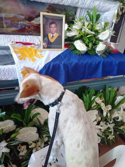 cane-funerale-amico