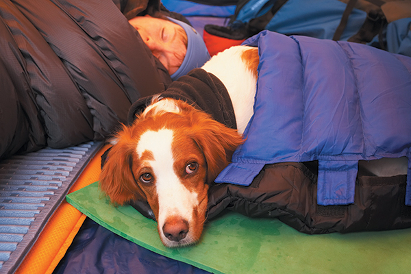 cane in camping