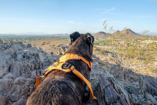 cane che guarda la montagna