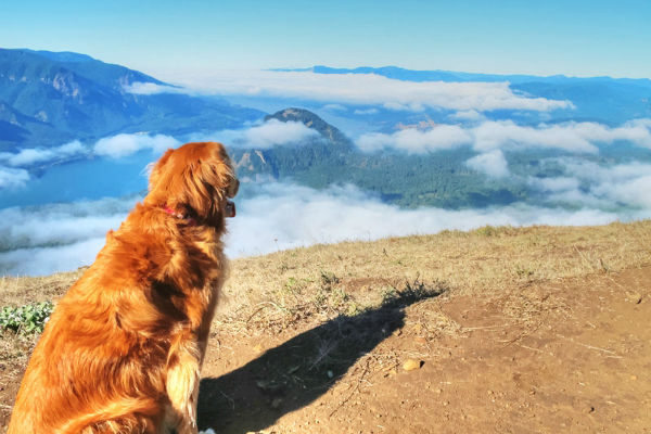 cane che guarda le montagne