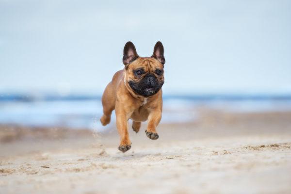 cane che salta in spiaggia