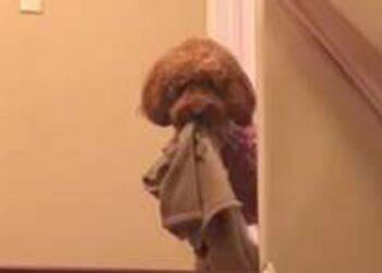 cane-inseparabile-coperta-speciale