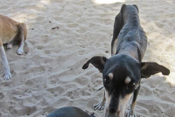 Cane malnutrito: come aiutarlo e prendersene cura