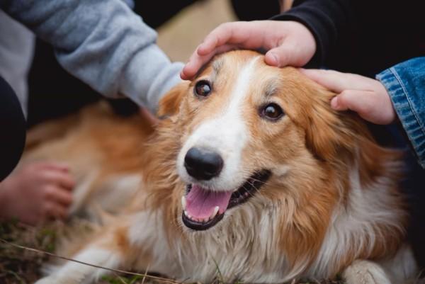 Circovirus nel cane: sintomi, cause, trattamento