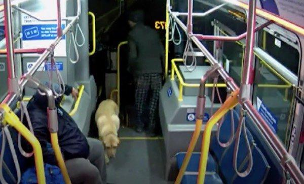 cane-rubato-bus