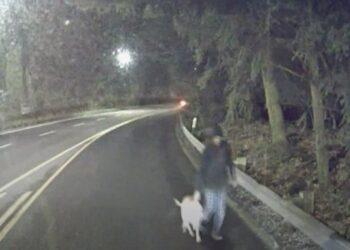 cane-salvato-dal-conducente-di-un-bus