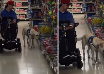 cane-sceglie-da-solo-il-suo-regalo-nel-negozio-di-giocattoli