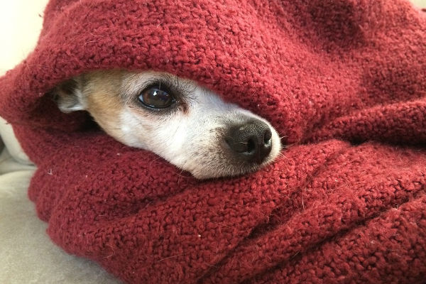 Il cane sente freddo?