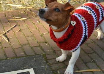 cane con il cappotto