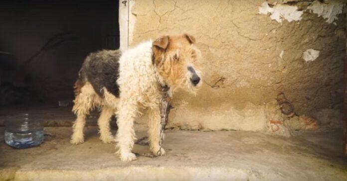 cane-trascorre-vita-incatenato