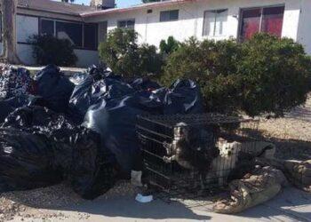 cani-abbandonati-nella-spazzatura