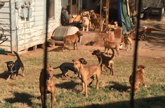 cani-adozione