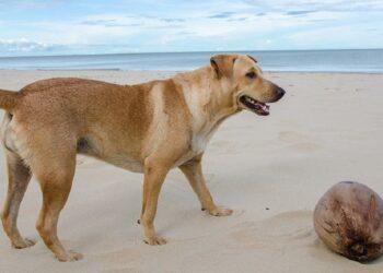 cane e noce di cocco