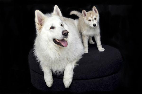 Cani e mirtilli: tutti i benefici
