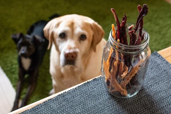Cani e snack: quanti e quando dovremmo darglieli?