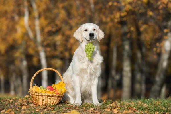 cane con l'uva