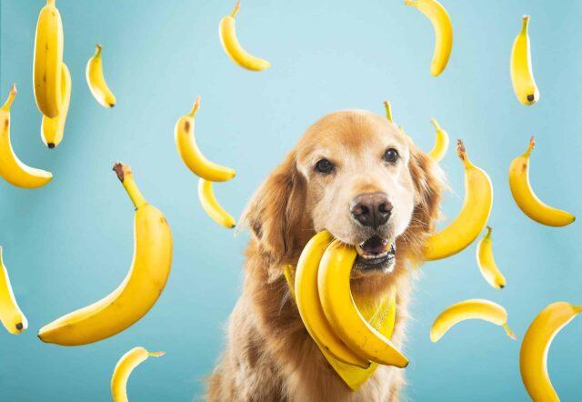 cane e banane