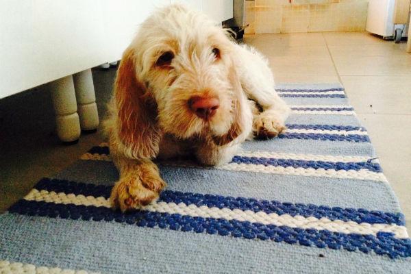 cane seduto sul tappeto