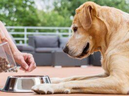 cibo-per-cani-donato-dipendenti-amazon