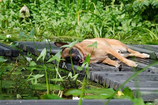 cane disteso su pontile