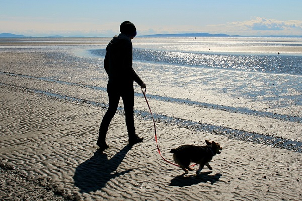cane e padrone sulla spiaggia