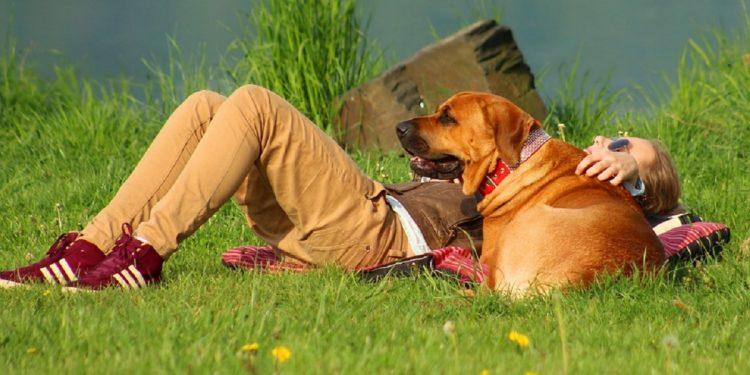 cane e padrone distesi al sole