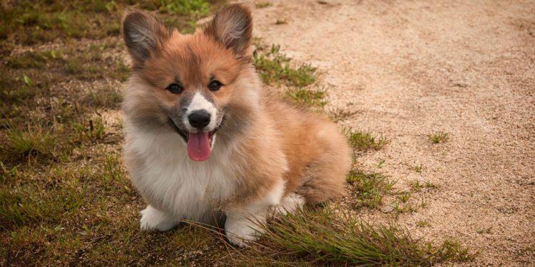 cane sul terreno