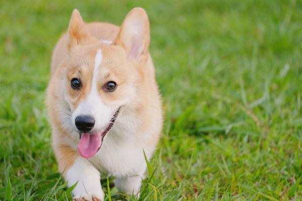 Come addestrare un cane a fare i bisogni