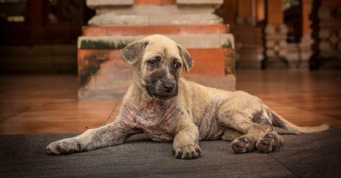 cucciolo di cane indisposto