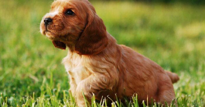 cucciolo di cane sul prato