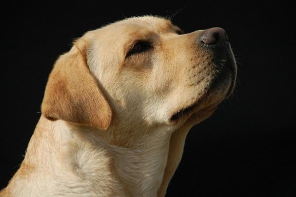 Come funziona la memoria dei cani?