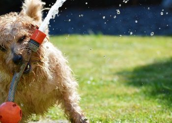 cane che gioca con idrante
