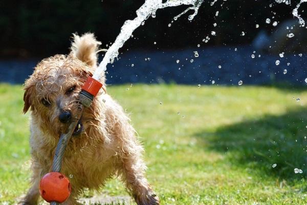 cane che gioca con getto d'acqua