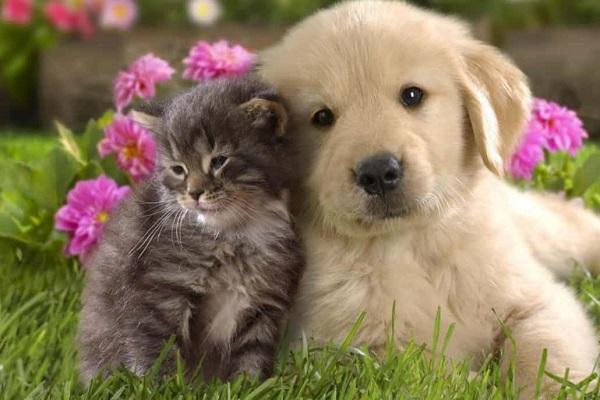 cuccioli di cane e gatto