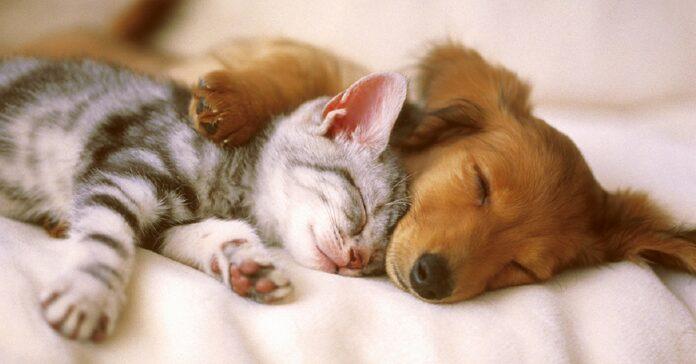 cane e gatto che dormono