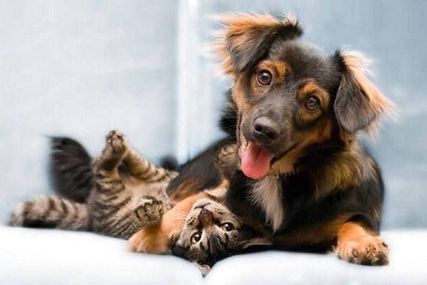 cane abbraccia gatto