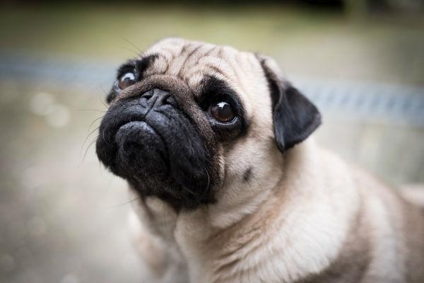 Convulsioni nel cane: come trattarle e tranquillizzarlo