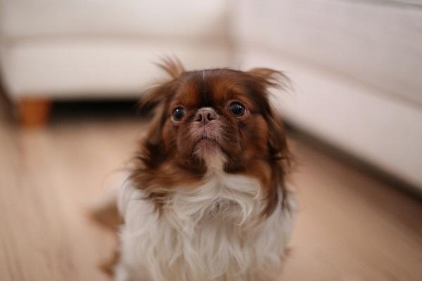 Cosa fare se il cane distrugge casa quando è solo?