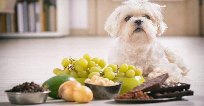 cane e cibi dannosi
