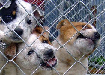 cuccioli di cane al canile
