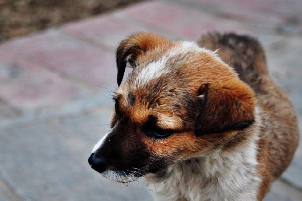cane di strada