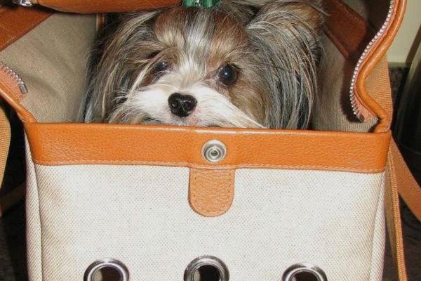 cucciolo dentro una borsa