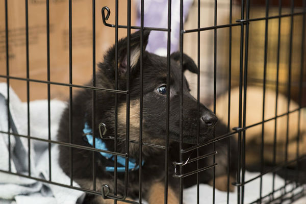 cucciolo dentro la gabbia