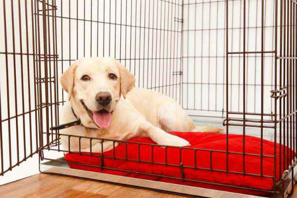 cane dentro la gabbia