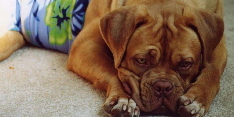 cane spossato